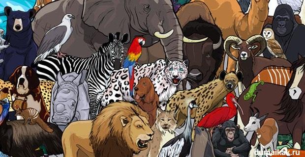 любимое животное, типы характеров, психология